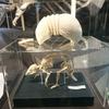 大哺乳類展2 -みんなの生き残り作戦@国立科学博物館
