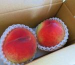 桃の不作の原因と信玄桃!美味しい山梨のブランド桃