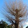 この木なんの木残った木(?)