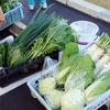 肌のプツプツが薄くなり、キレイになったのは、この食事! 煮野菜を多く食べたこと。
