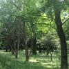 森林浴(°▽°)
