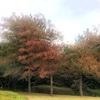 台風による紅葉、そして落葉
