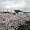 阪神競馬場へ遠征  2日目