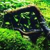 アクアテラリウム水槽特集!! 美しいリシアが生い茂るレイアウトをご紹介!