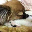 レオDiary*犬のいる暮らし*