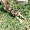 【怒りながら泳ぐ猫】8月末テキサス州を襲ったハリケーンハービーの際に撮られた怒り顔の猫が話題。
