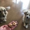 わんこと米粉クッキーの写真撮影