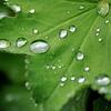 愛はこんなに辛いものなら私一人で生きていけない 「九月の雨」 太田裕美