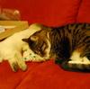 猫との出会い(2)
