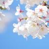 《五分咲き》2020年 醍醐桜の開花状況・天の川の写真はいつ?|岡山県真庭市