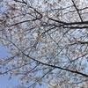 休日ぶらぶら & 釣りぶらぶら 2018 5回目 3/31~4/1