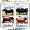 和牛のお話①
