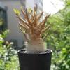色々植物観察。