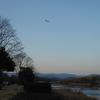鴨川の水鳥たちと夕景。-カワアイサ-