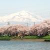 鳥海山と桜、新井田川ほとりにて。