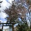 境内の桜や梅が見頃を迎えております