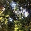音のある森の風景