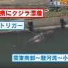 【前兆】愛知県・三河港にクジラ漂着+茨城・千葉M3~4規模3連発+ハムスター前兆+満月トリガー注意