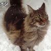 優しい老猫フサボンが尿毒症で入院した・・・お別れの覚悟