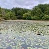 蛇の池(広島県廿日市)