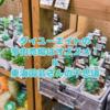 たにログ224 【クチコミ】ダイユーエイトで多肉狩りは?不思議な東海園芸の多肉の評価!