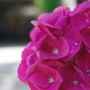 夏の花が・・・