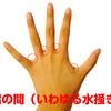 指の水かきって英語で何て言うの?!