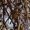 冬のかわいい野鳥