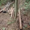 去年の伐木 尺取虫方式 Logging in the last year