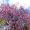 春と花粉症とドクターショッピング