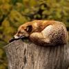 寝起きを充実させる効果的な工夫