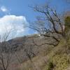 白髪山「白い異の世界」