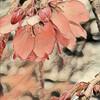 【花粉症対策】に悩む方へのオイルボディトリートメントをしました。@新潟市北区ドテラでマッサージ