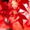 新潟市内で楽しめる2015秋の紅葉デートスポット!