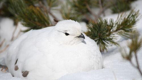 雪山の寒苦鳥にならない信心を