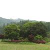 鈴鹿:鎌ヶ岳のシロヤシオ「純白の白い肌」