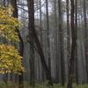 Snapshot  ~『雨の秋』