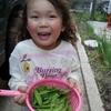 家庭菜園20140513