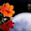 水滴と光の写真の撮り方