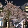 ストロボ Nikon SB-400はマニュアル設定できることを桜のおかげで知りました