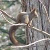 野幌森林公園は楽しい!24 エゾリスは公園で何をする?