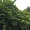 17/4/29 下仁田 蜘蛛の呪い