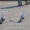 ヴェネツィア、海のギャング達