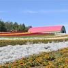 電車とバスで観光する北海道一人旅。函館・旭川・富良野・美瑛・札幌【1日目】