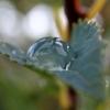 コデマリの水滴 2014 8月