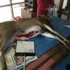 2月11日狩猟免許講習 12日狩猟