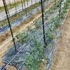 農家ブログ☆色んな野菜の苗が成長中🌟