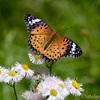 生き物散歩 蝶の里公園
