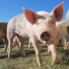 「豚に真珠」は聖書が元ネタ!オンライン英会話で使った表現集[1]