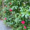 ザ・プリンス さくらタワー周辺の日本庭園を探索!